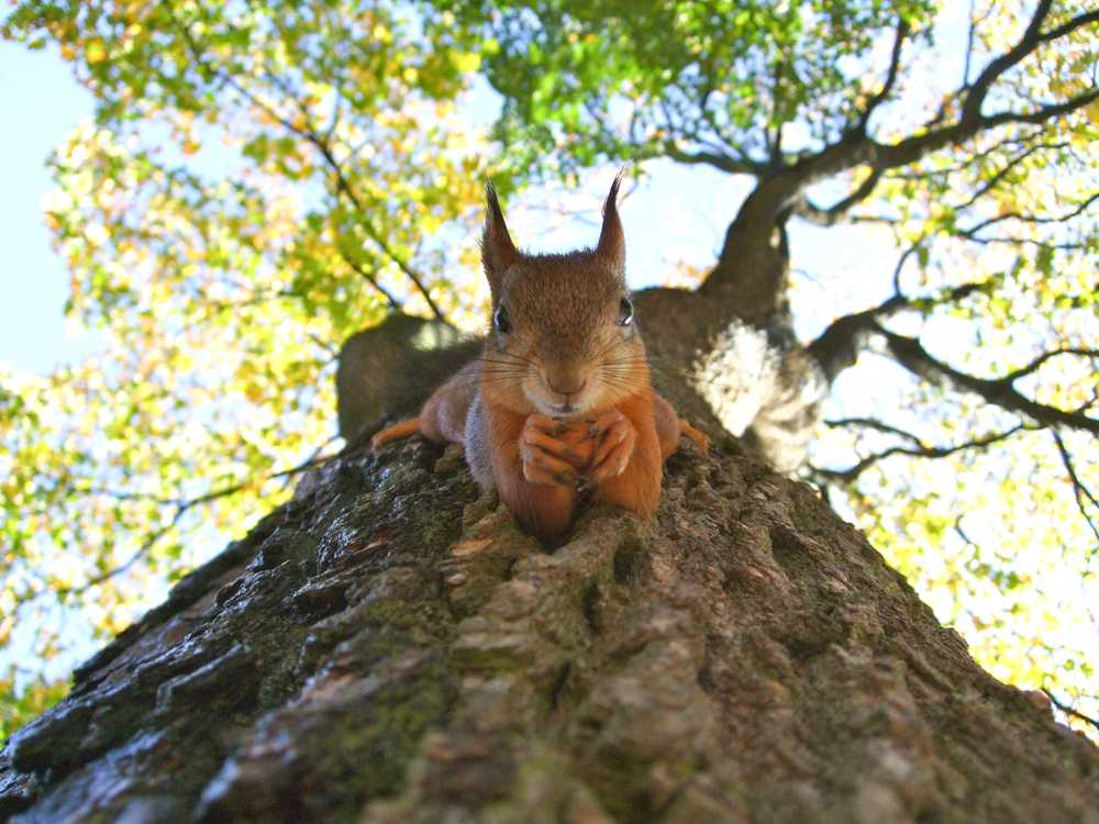 brown squirrel on green leafed tree