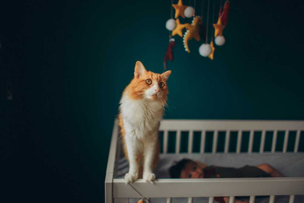 orange and white tabby cat on white wooden crib