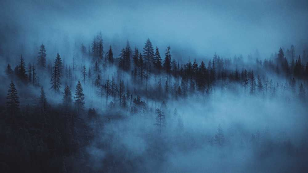 nature photography of pine trees covered by fogs