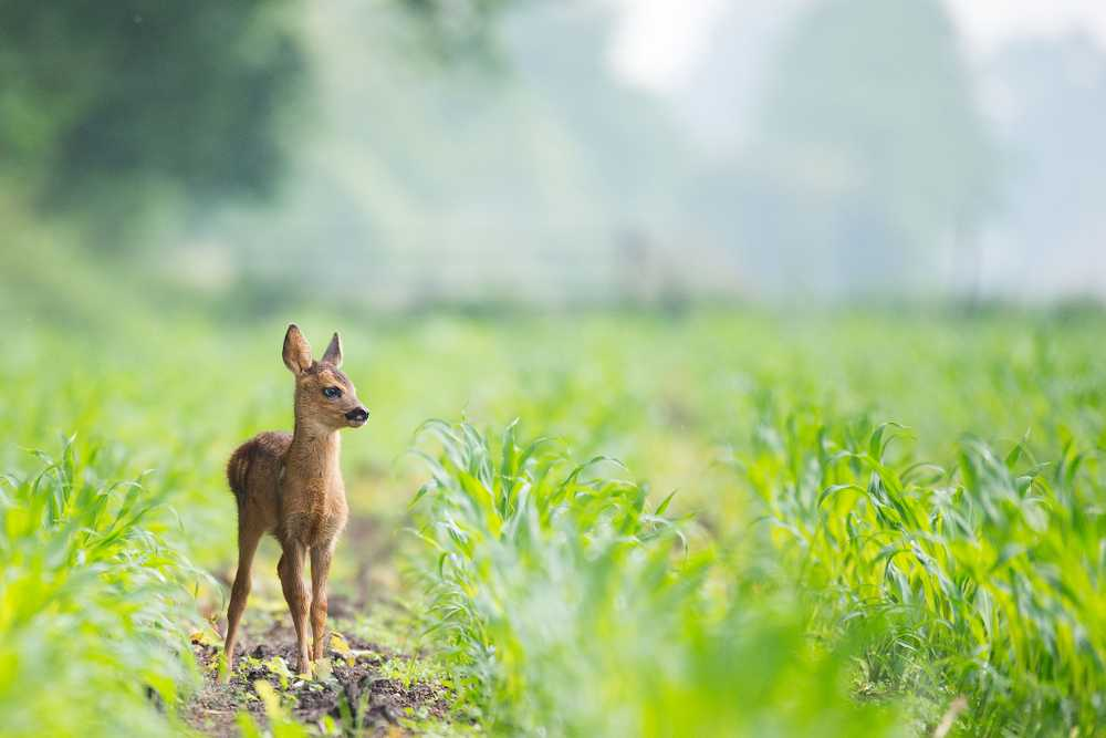 beige baby deer on brown soil between green grasses at daytime