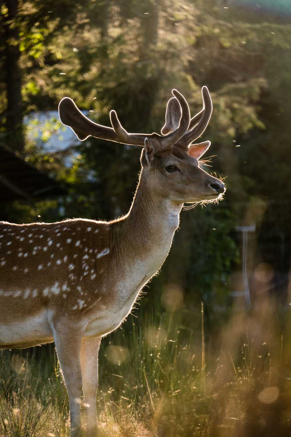photography of deer shined by sunlight