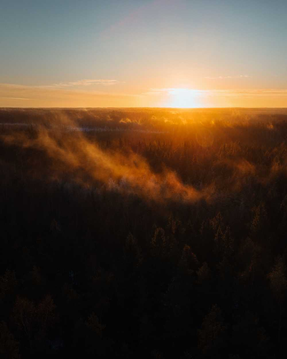 aerial view of trees during sunrise