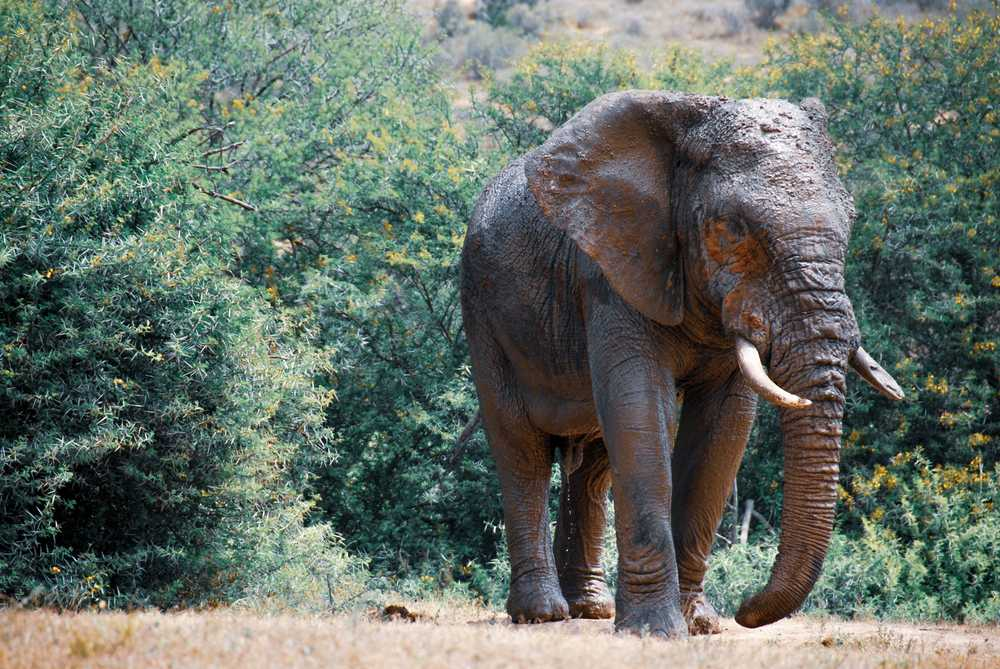 elephant walking on dirt road near green trees during daytime
