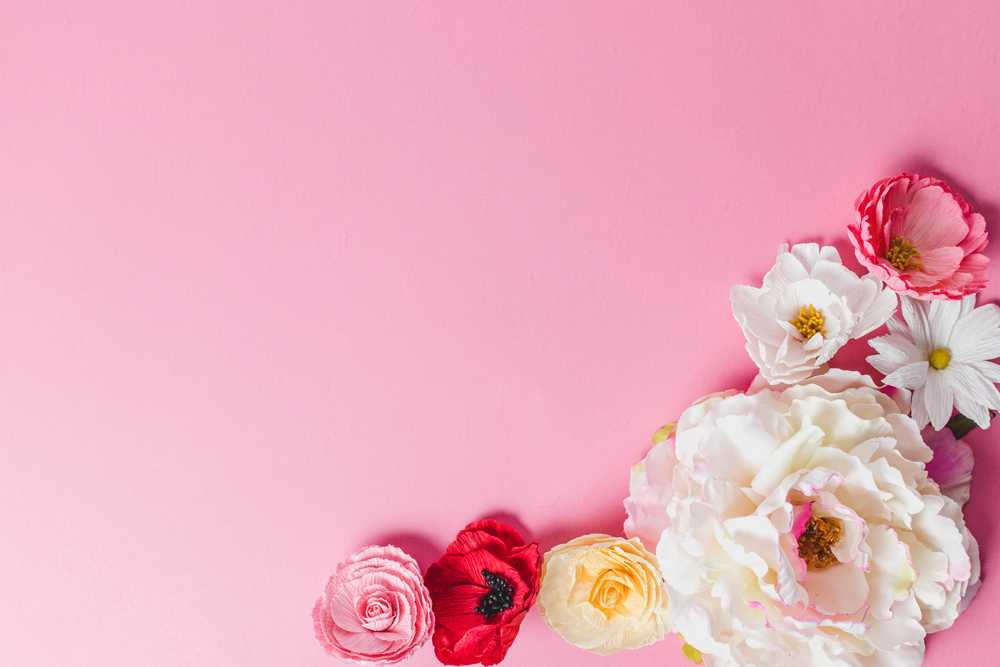 white and pink roses on pink wall