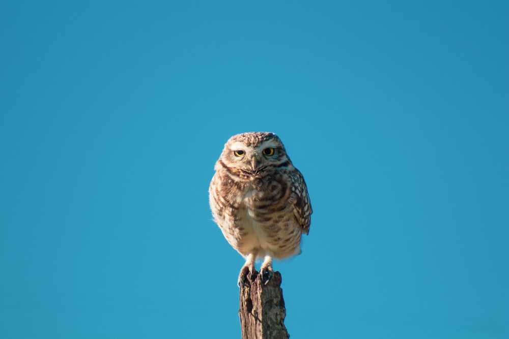 brown and white owl standing on pole