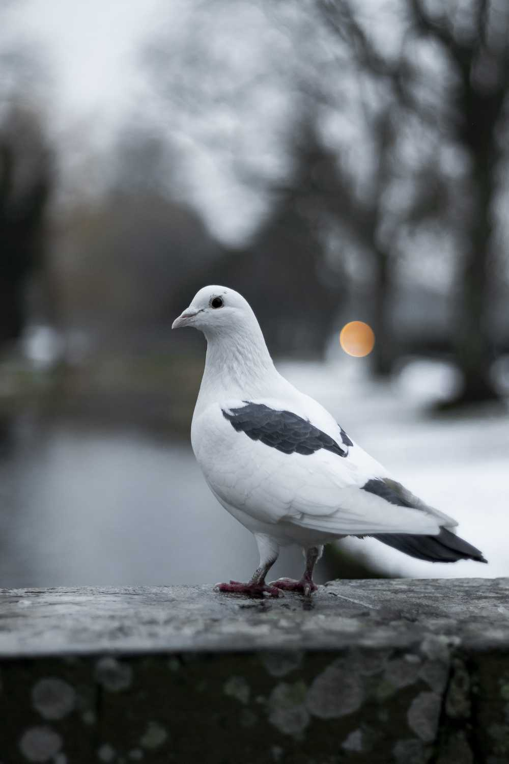 tilt shift focus photography of white pigeon
