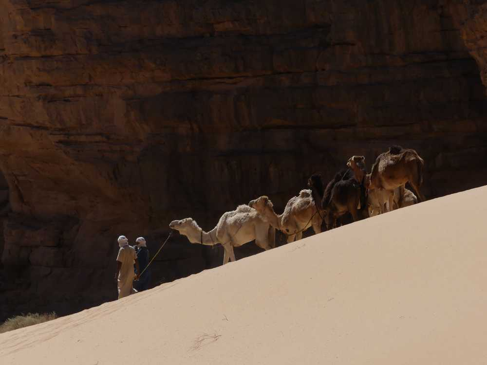 group of goats on white sand during daytime