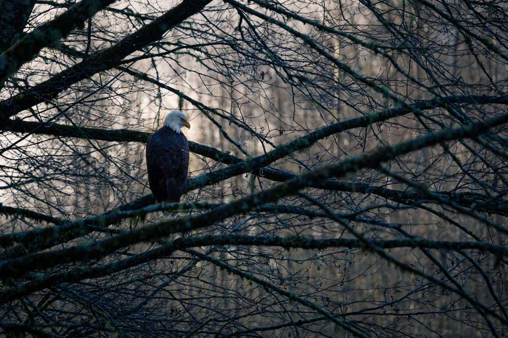 photography of bald eagle perching on tree branch