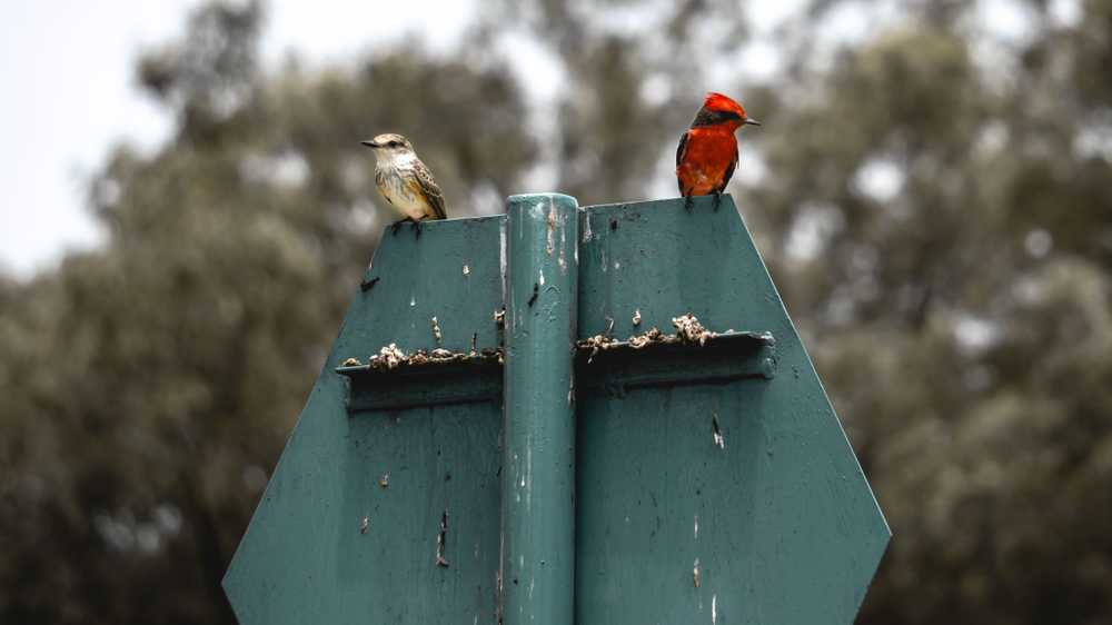 two red and white birds on signboard