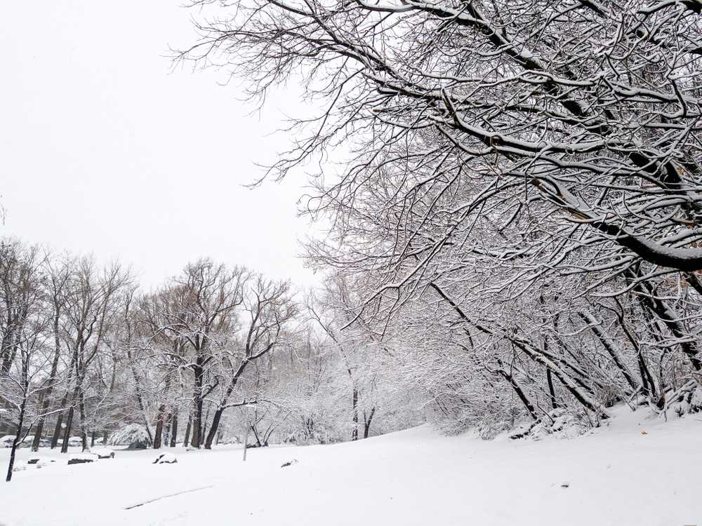 white snowfield surrounded trees