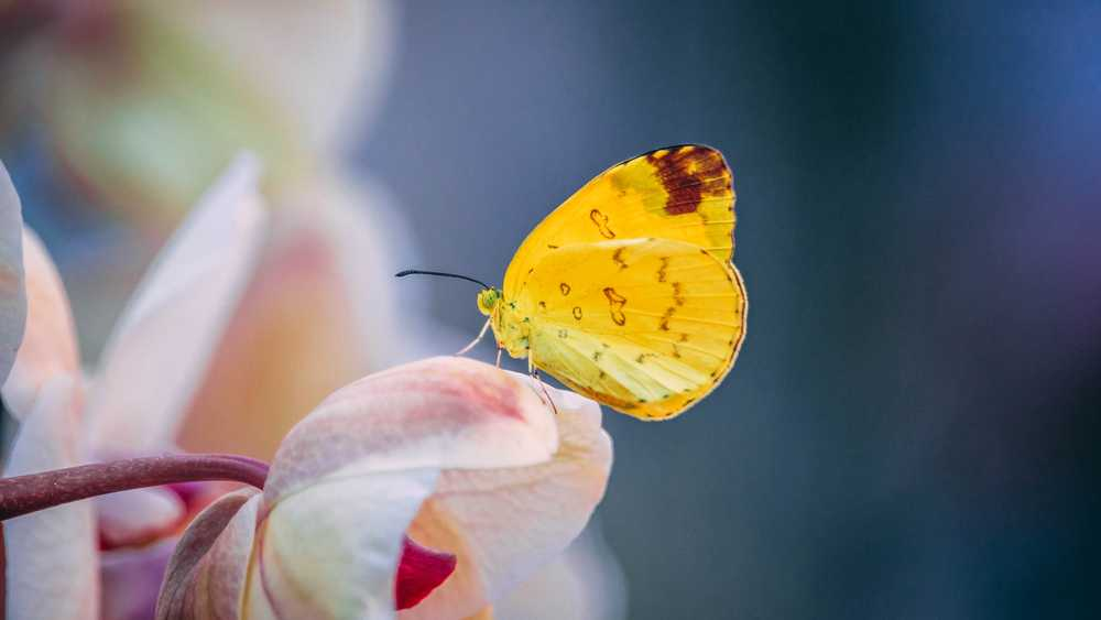 selective-focus photography of yellow butterfly
