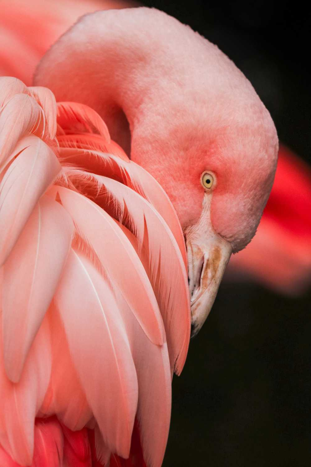 close up photography of a pink bird