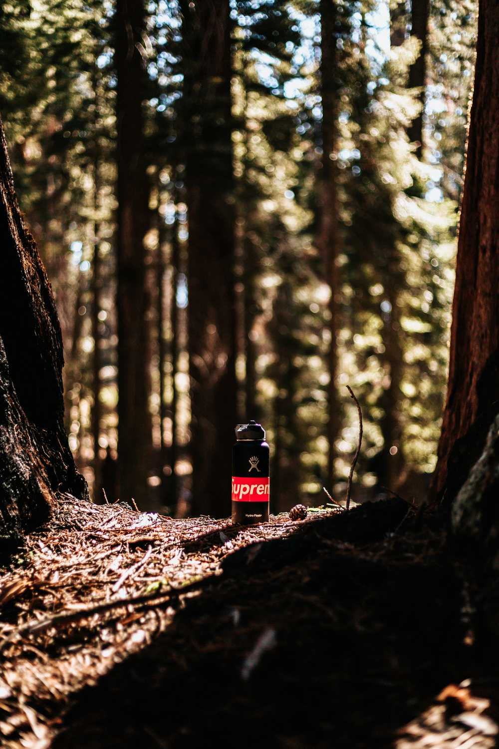 black and red Supreme bottle between two brown tree trunks selective fucos photo