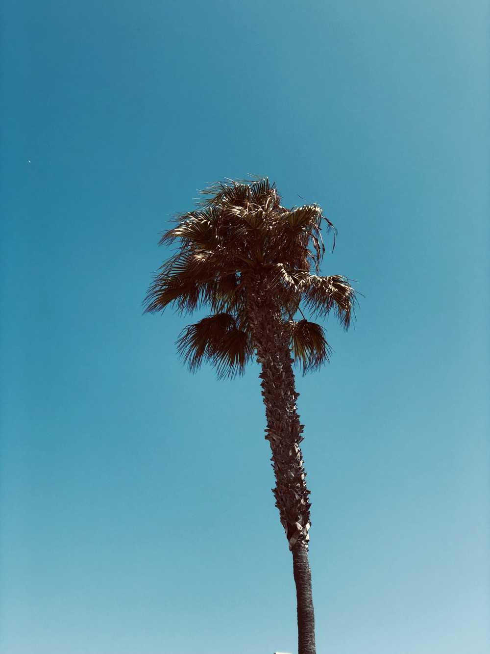 green-leafed palm tree under a calm blue sky