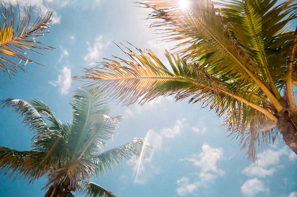 low angle photography of green palm trees during daytime